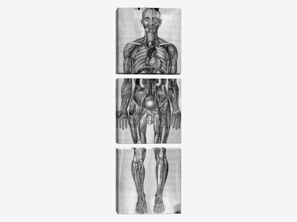 Human Anatomy Composition #3 by Unknown Artist 3-piece Art Print