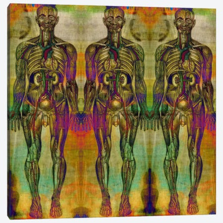 Human Anatomy Composition #8 Canvas Print #UVP46g} by Unknown Artist Canvas Print