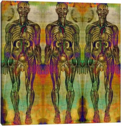 Human Anatomy Composition #8 Canvas Print #UVP46g