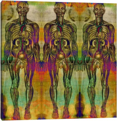 Human Anatomy Composition #8 Canvas Art Print
