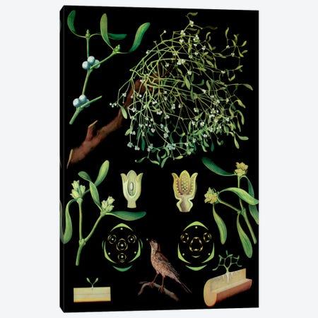 Mistletoe Canvas Print #VAC1192} by Vintage Apple Collection Canvas Print