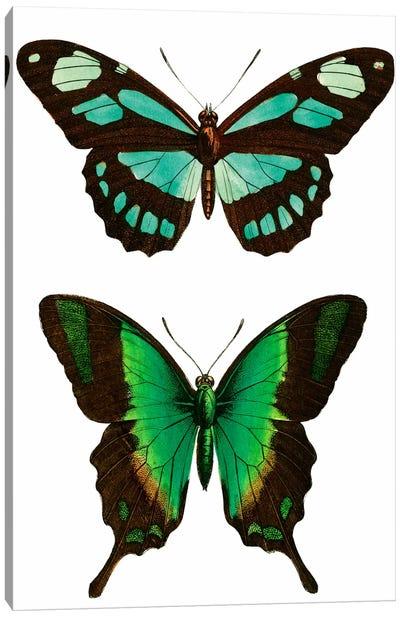 Aqua Butterflies Canvas Print #VAC1197