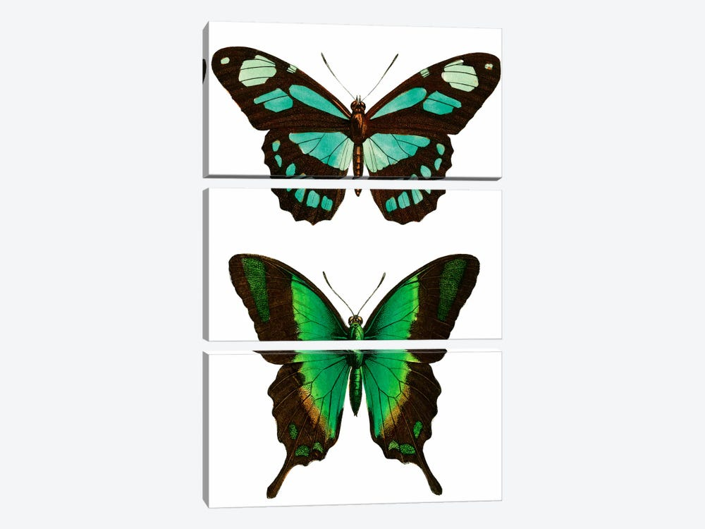 Aqua Butterflies by Vintage Apple Collection 3-piece Canvas Art Print