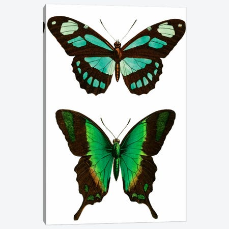 Aqua Butterflies Canvas Print #VAC1197} by Vintage Apple Collection Canvas Art