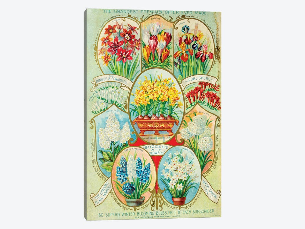 Autumn 1900 Winter Blooming Ad 1-piece Art Print