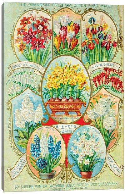 Autumn 1900 Winter Blooming Ad Canvas Art Print