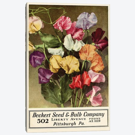 Beckert Seed & Bulb Company Canvas Print #VAC1385} by Vintage Apple Collection Canvas Art Print