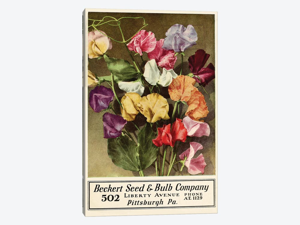 Beckert Seed & Bulb Company by Vintage Apple Collection 1-piece Canvas Art Print