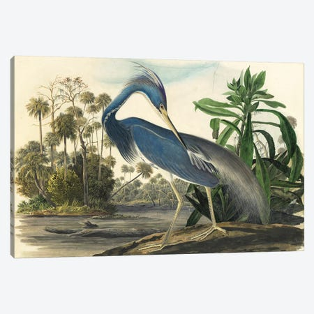 Blue Heron Canvas Print #VAC1411} by Vintage Apple Collection Canvas Art