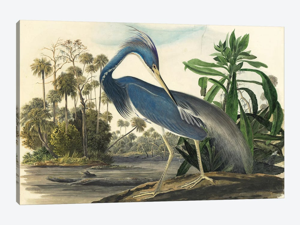 Blue Heron by Vintage Apple Collection 1-piece Canvas Print