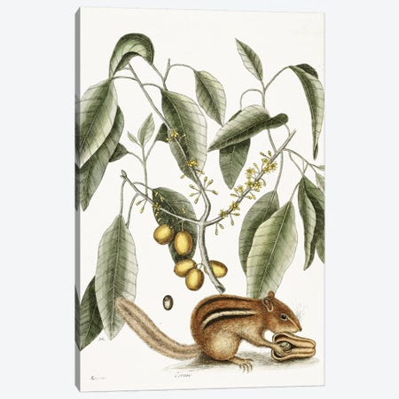 Chipmunk Canvas Print #VAC1460} by Vintage Apple Collection Art Print