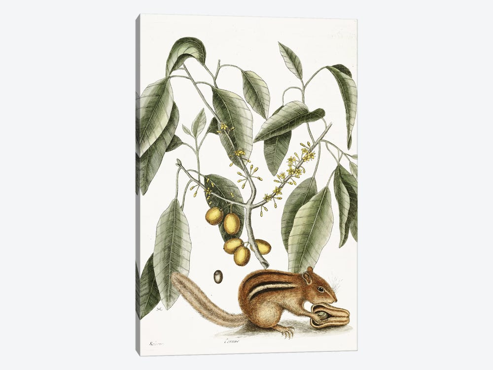 Chipmunk by Vintage Apple Collection 1-piece Canvas Print
