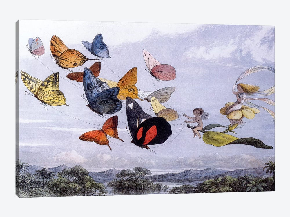 Fairy Butterflies by Vintage Apple Collection 1-piece Canvas Print