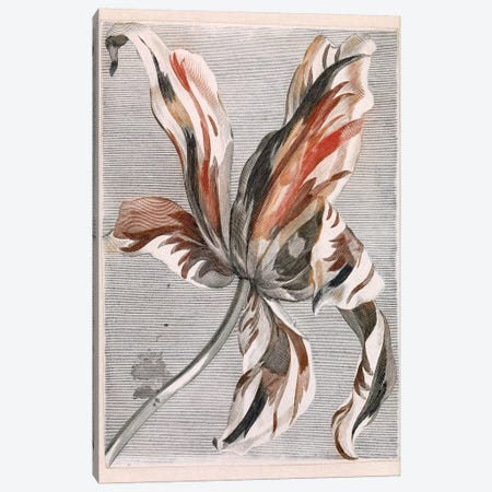 Flowers V Canvas Print #VAC1598} by Vintage Apple Collection Canvas Print