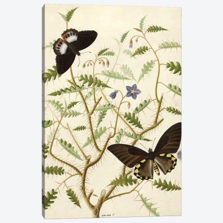 Flowers XX Canvas Print #VAC1612} by Vintage Apple Collection Canvas Artwork