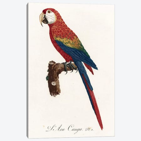 Jacques Barraband Macaw Canvas Print #VAC1718} by Vintage Apple Collection Canvas Art Print