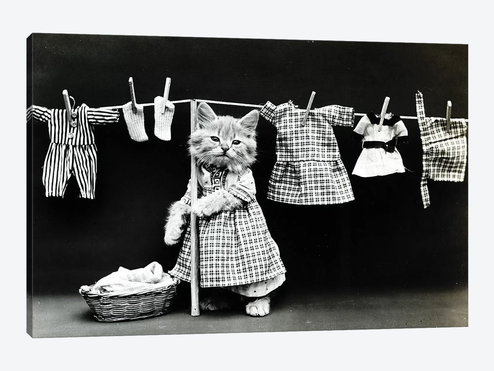 Kitty Laundry by Vintage Apple Collection 1-piece Canvas Artwork