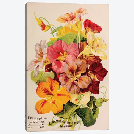 Livingston's Top-Notch Mixture, Nasturtium Canvas Print #VAC1786} by Vintage Apple Collection Art Print