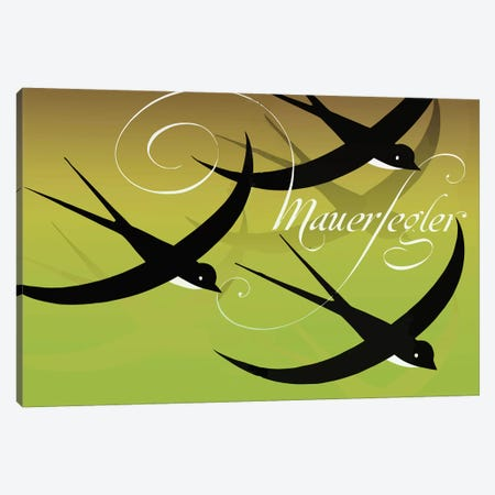 Mauersegler (Common Swift) Canvas Print #VAC1818} by Vintage Apple Collection Canvas Artwork