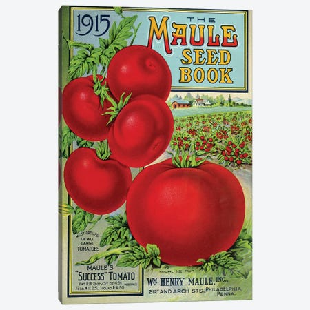 Maule Tomato, 1915 Canvas Print #VAC1823} by Vintage Apple Collection Canvas Art Print