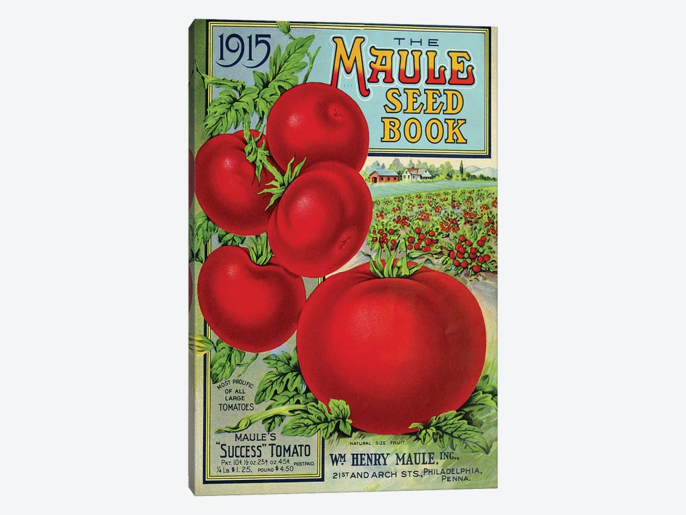 Maule Tomato, 1915 by Vintage Apple Collection 1-piece Canvas Artwork