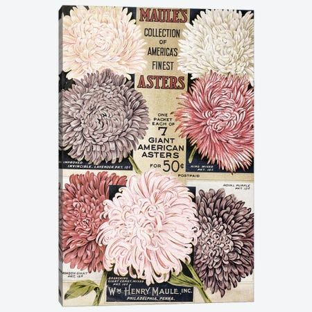 Maule's Asters, 1915 Canvas Print #VAC1825} by Vintage Apple Collection Canvas Artwork