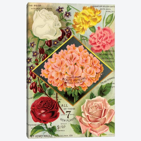 Maule's See Geraniums, 1893 Canvas Print #VAC1827} by Vintage Apple Collection Canvas Artwork