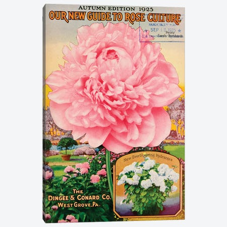 Our New Guide to Rose Culture, 1925 Canvas Print #VAC1874} by Vintage Apple Collection Art Print