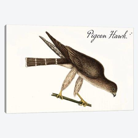 Pigeon Hawk Canvas Print #VAC1913} by Vintage Apple Collection Canvas Art Print