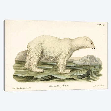 Polar Bear Canvas Print #VAC1923} by Vintage Apple Collection Canvas Wall Art