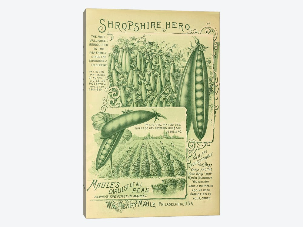 Shropshire Peas by Vintage Apple Collection 1-piece Canvas Art Print