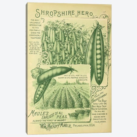 Shropshire Peas Canvas Print #VAC1994} by Vintage Apple Collection Canvas Wall Art