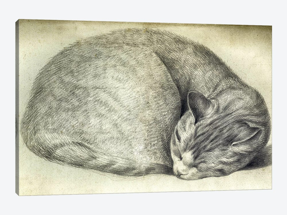 Sleeping Cat by Vintage Apple Collection 1-piece Canvas Print