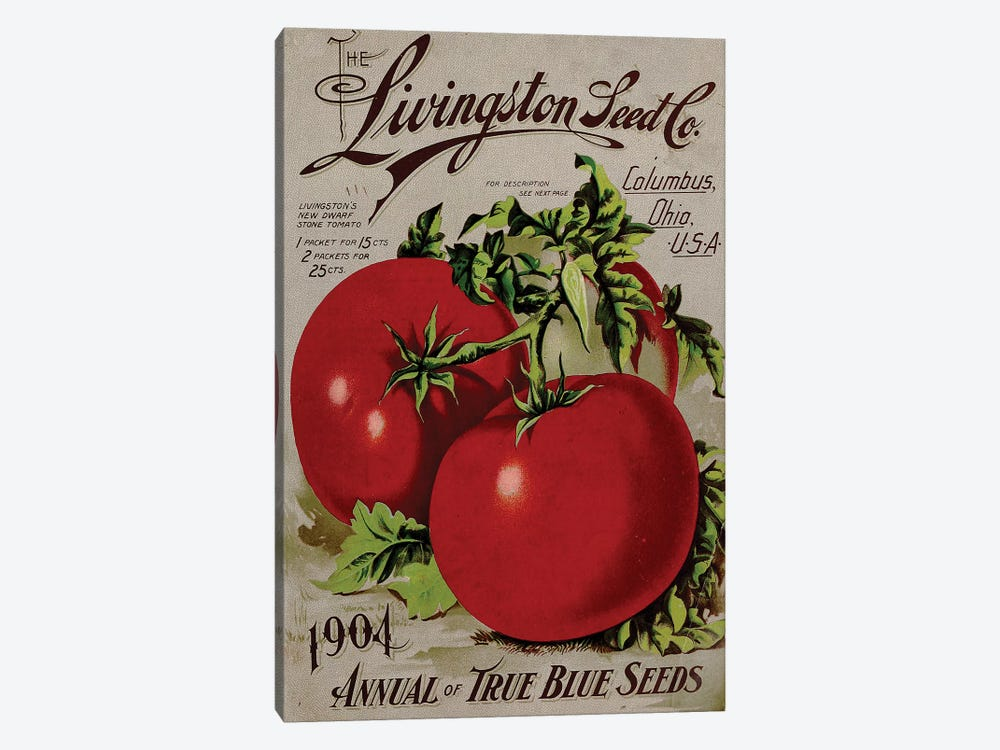 The Livingston Seed Co., Tomatoes, 1904 by Vintage Apple Collection 1-piece Canvas Art Print