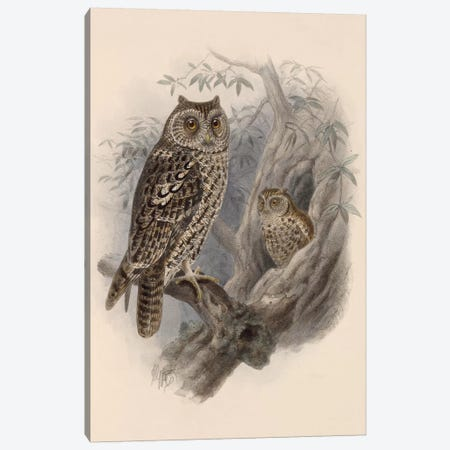 Tree Owls, 1902 Canvas Print #VAC2079} by Vintage Apple Collection Canvas Wall Art