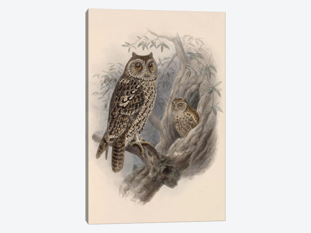 Tree Owls, 1902 by Vintage Apple Collection 1-piece Canvas Artwork