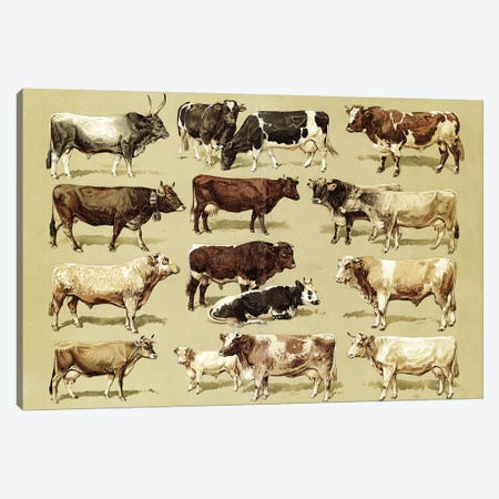 Varieties Of Cow Canvas Print #VAC2099} by Vintage Apple Collection Canvas Wall Art
