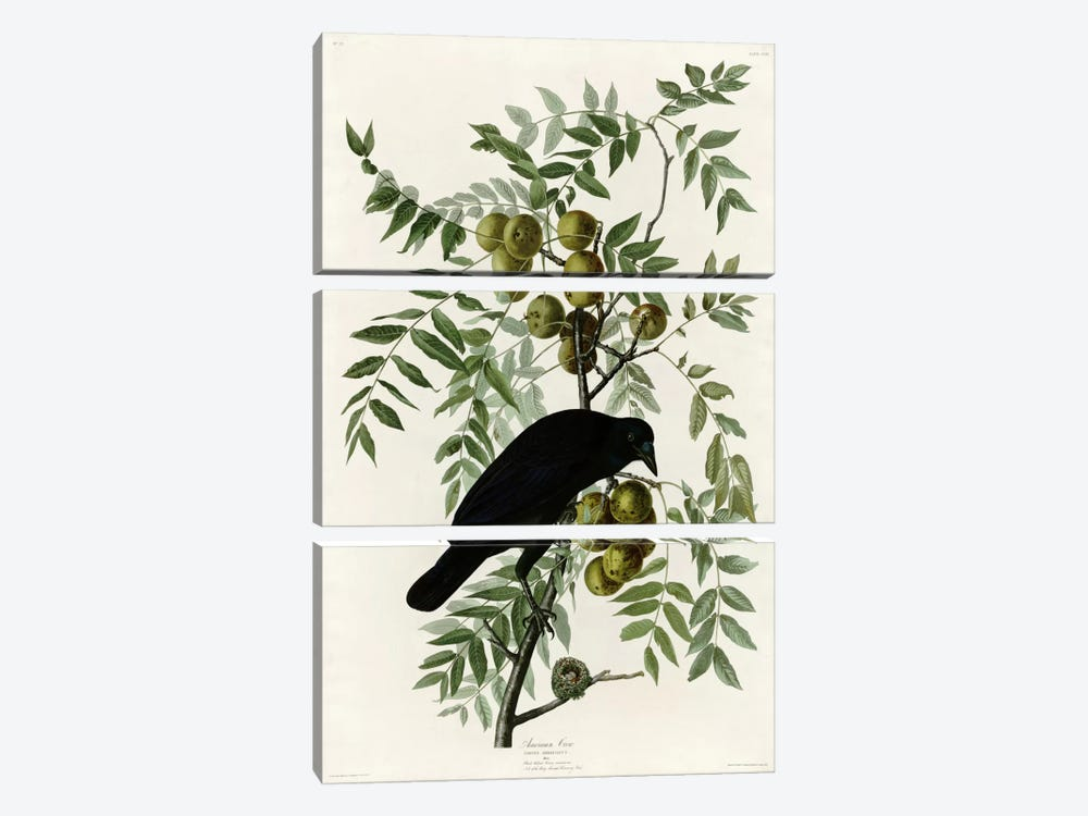 American Crow by Vintage Apple Collection 3-piece Canvas Print