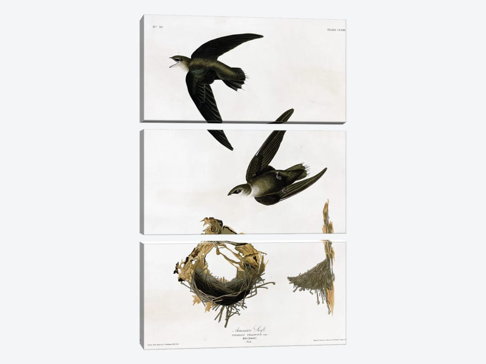 American Swift by Vintage Apple Collection 3-piece Art Print
