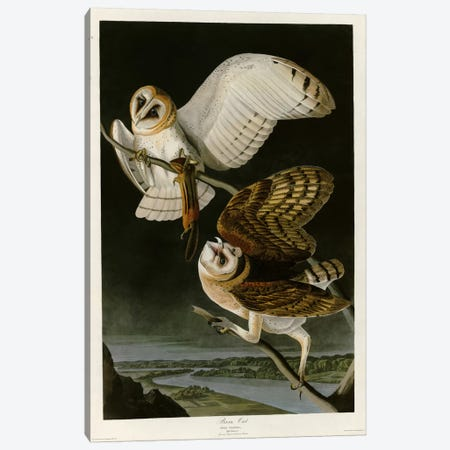 Barn Owl Canvas Print #VAC289} by Vintage Apple Collection Art Print