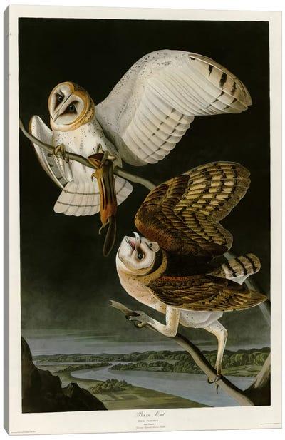 Barn Owl Canvas Print #VAC289