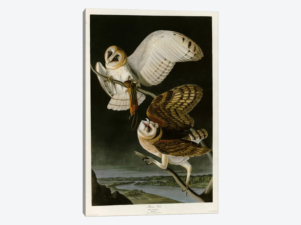 Barn Owl by Vintage Apple Collection 1-piece Canvas Art