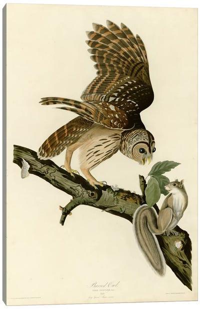 Barred Owl Canvas Print #VAC291