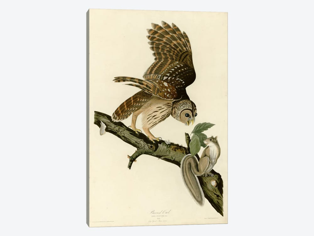 Barred Owl by Vintage Apple Collection 1-piece Canvas Art Print