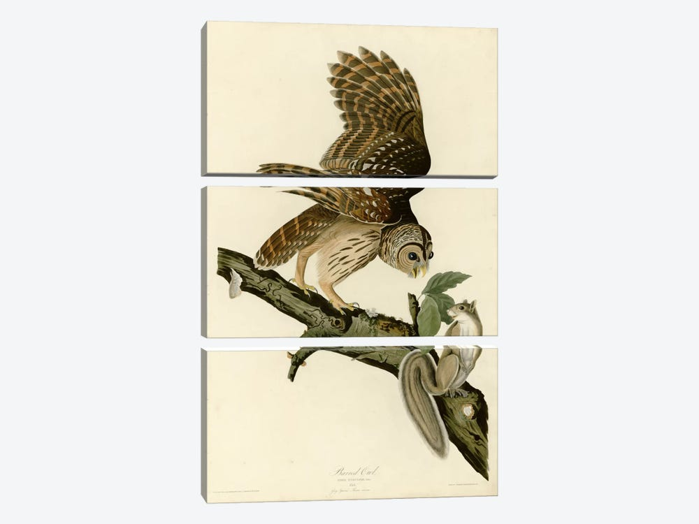Barred Owl by Vintage Apple Collection 3-piece Canvas Print