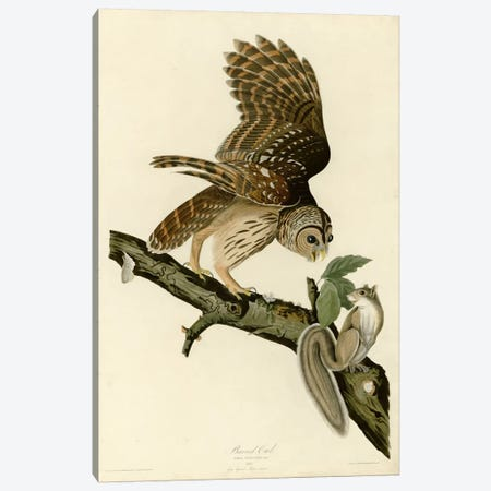 Barred Owl Canvas Print #VAC291} by Vintage Apple Collection Canvas Art