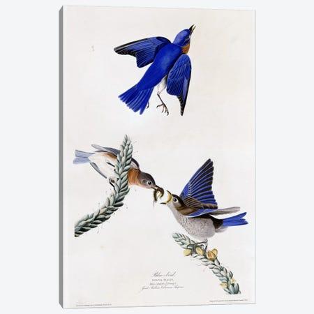 Bluebird Canvas Print #VAC304} by Vintage Apple Collection Art Print