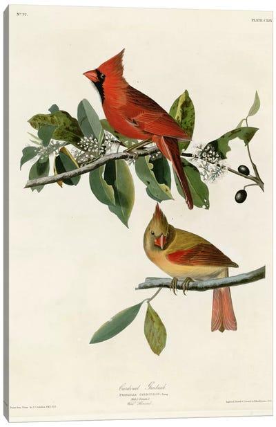 Cardinal Grosbeak Canvas Print #VAC309