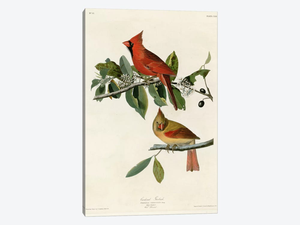 Cardinal Grosbeak 1-piece Canvas Art Print