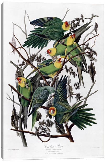 Carolina Parrot Canvas Art Print